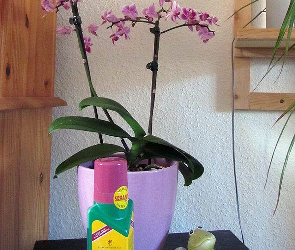 SERAMIS® Vitalnahrung für Orchideen – Produkttest