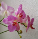 Blüten im Fokus