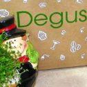 Degustabox Dezember 2017